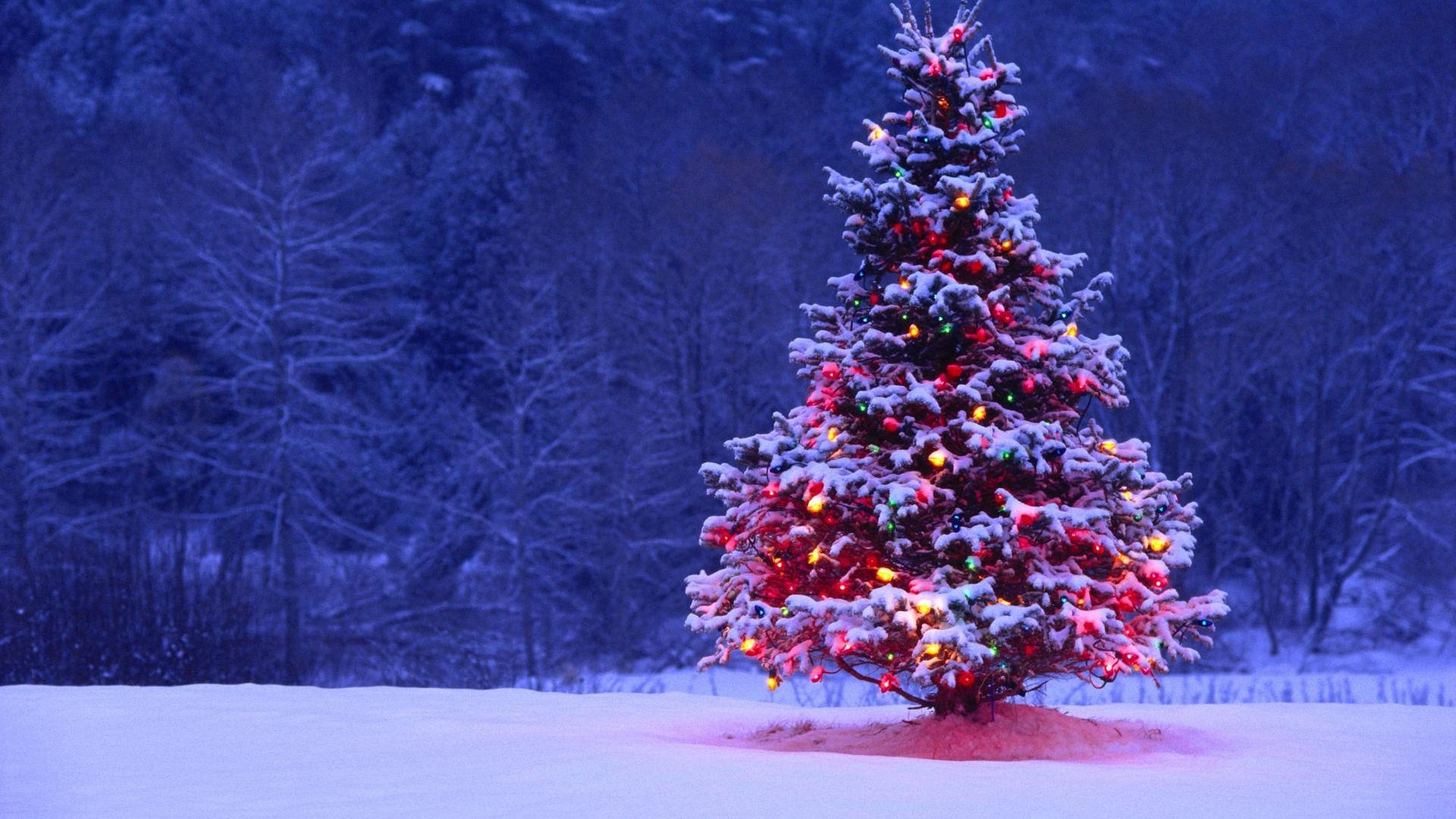 free christmas tree wallpapers image
