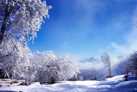 white tree picture pc
