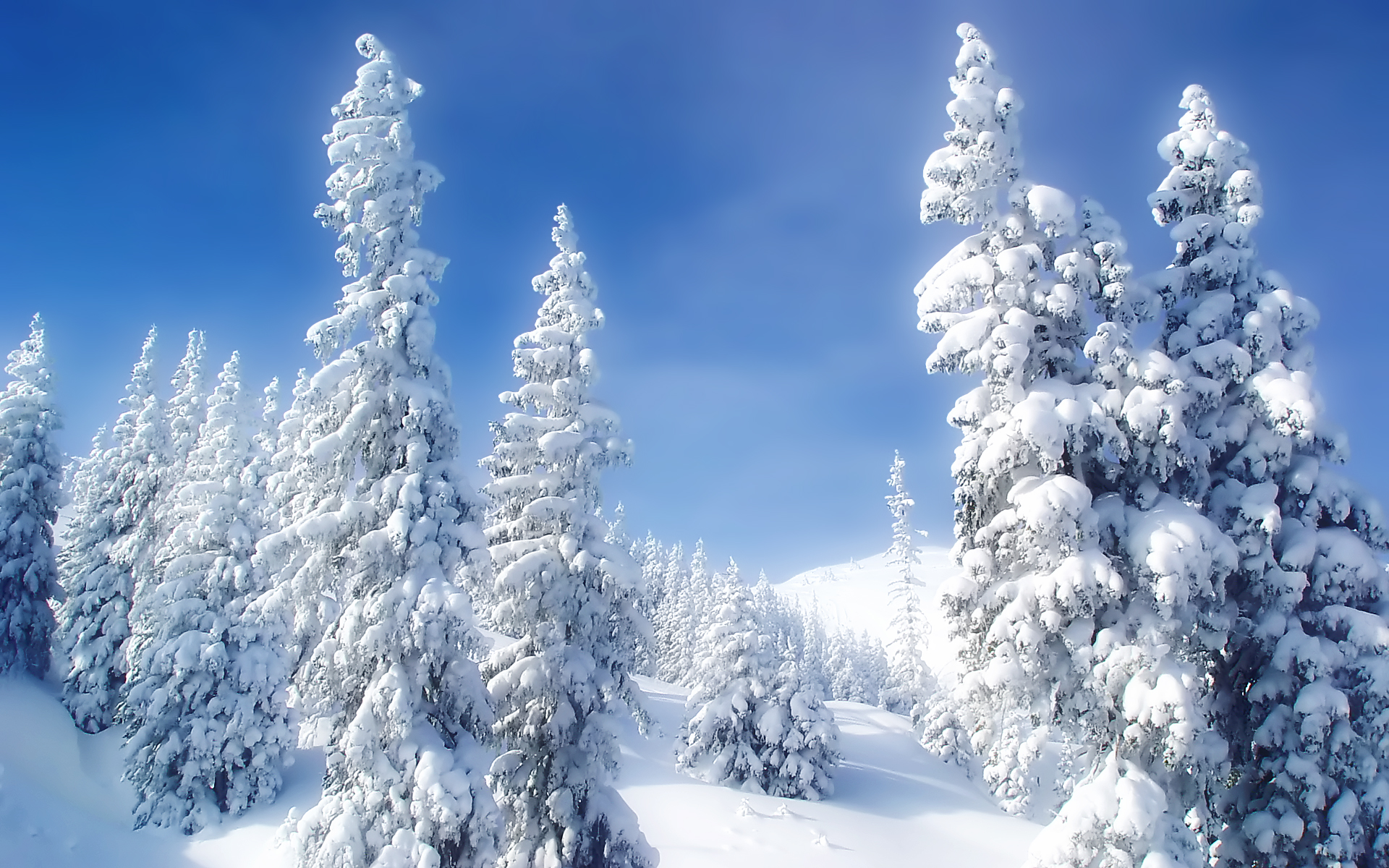 widescreen white tree image