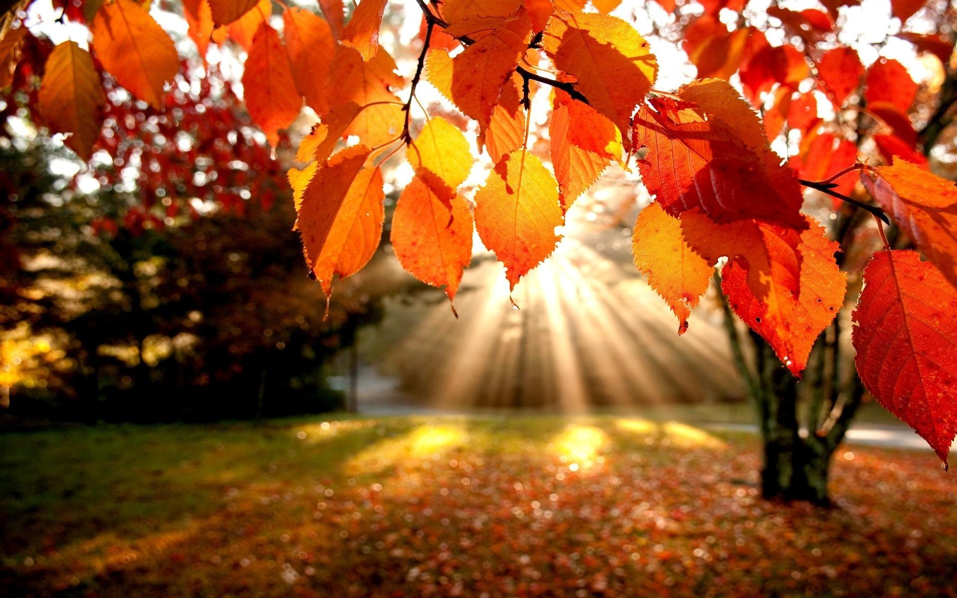 landscape falling leaves picture