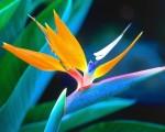 cute tropical flowers