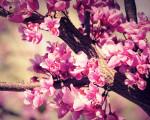 wonderful spring flowers image