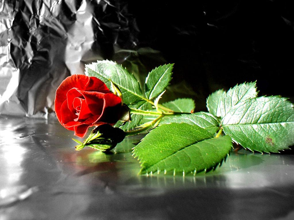 fractal 3d rose image