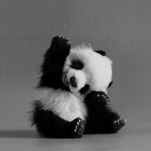baby panada