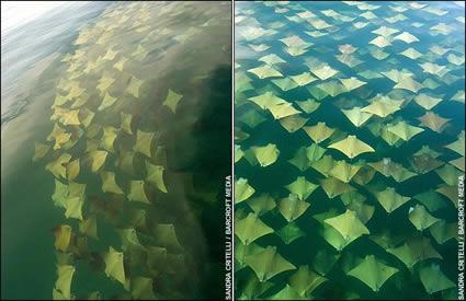 fantasy golden rays image