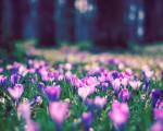 super spring flower hd image