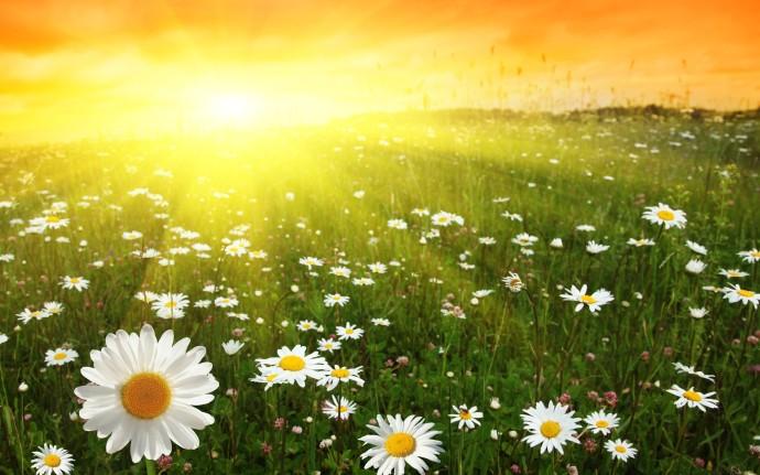 super sunny day image pc