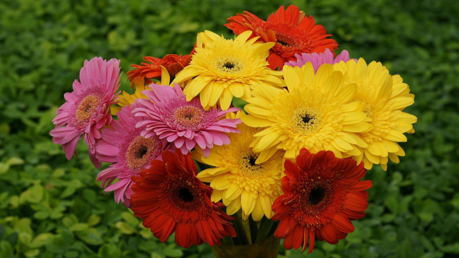 floral gerbera flower image