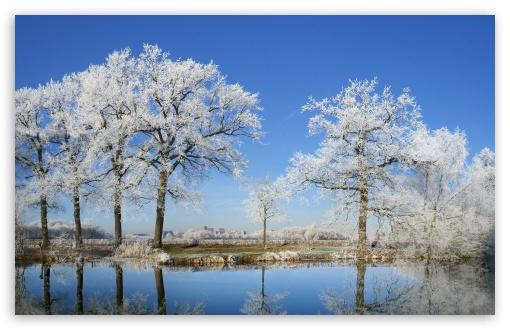 landscape frosty trees image