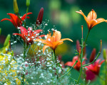 nature spring garden photos