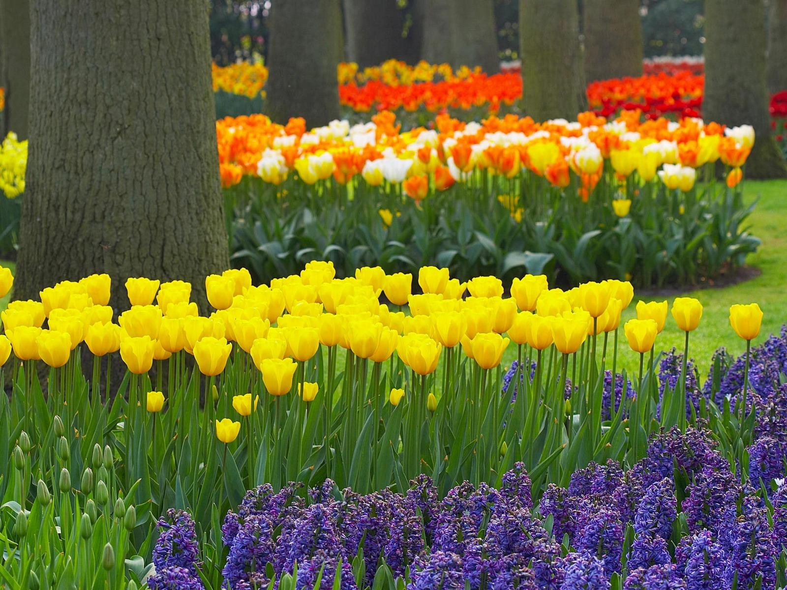 sweet spring garden image