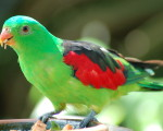 top parrot photo image