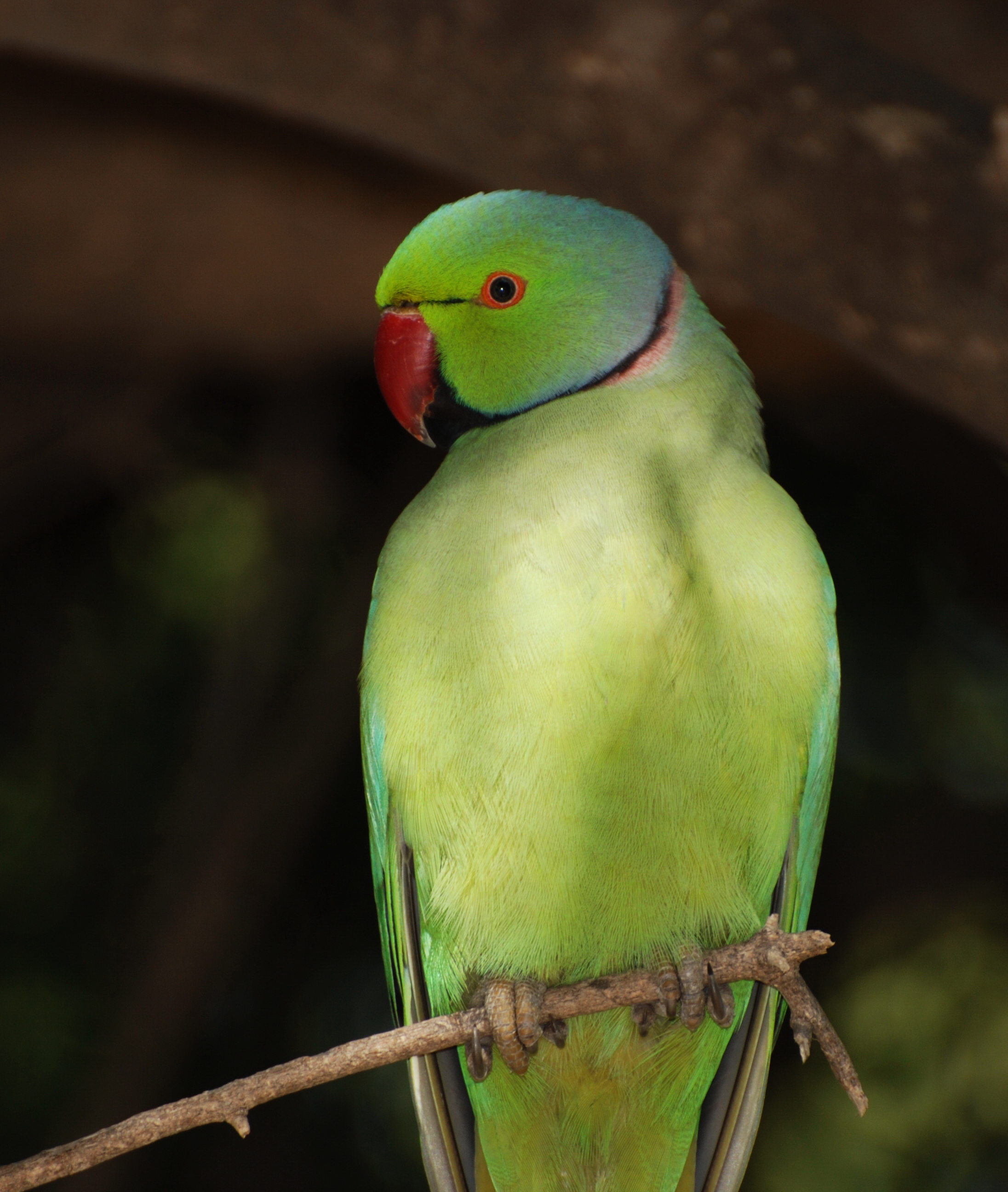 best parrot photo image