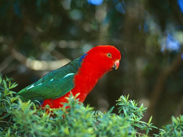 cute parrot photo picture