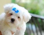cute puppy photo image