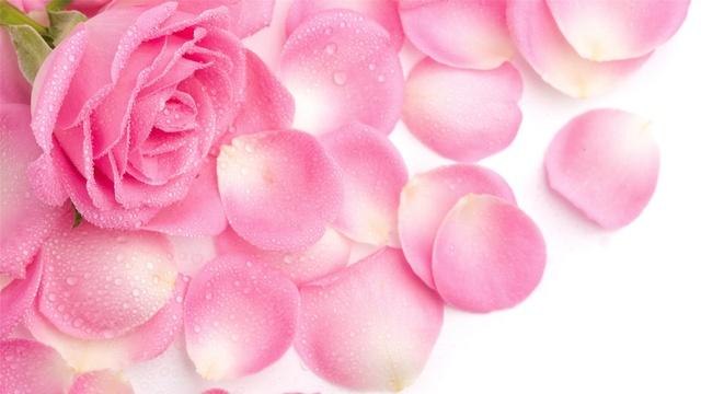 fractal pink petal picture