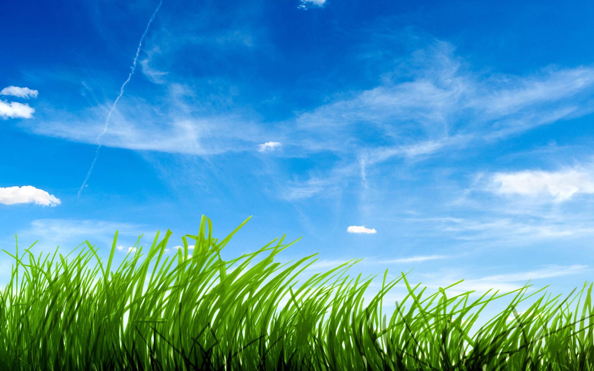 blue sky grass image