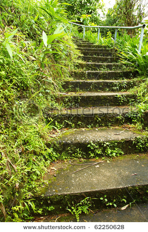 nice mossy stairways image
