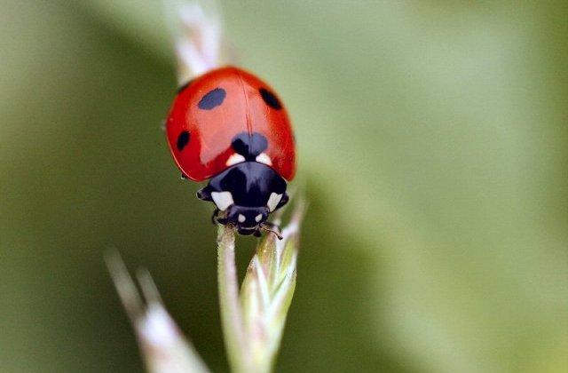 high quality ladybug image