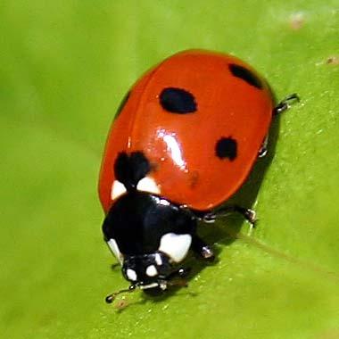 best ladybug pictures