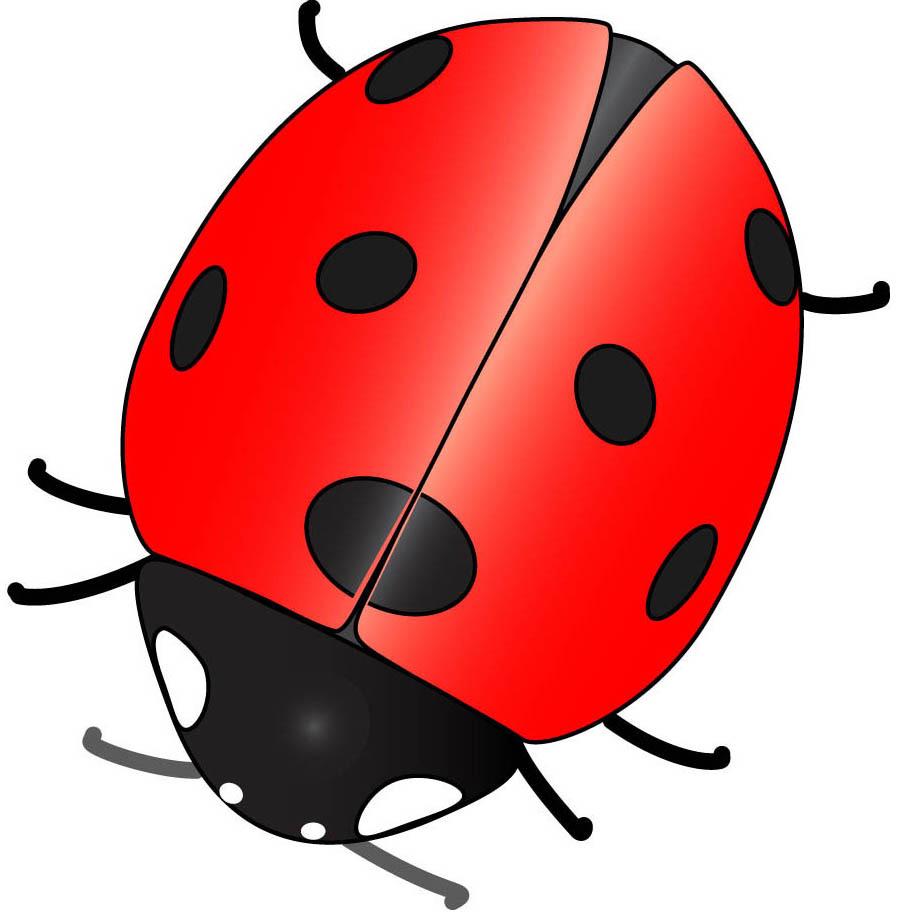 full red ladybug wallpaper