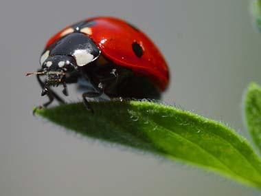 super ladybug picture image