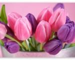 pink HD tulip image