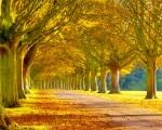 beautiful scenery wallpaper image