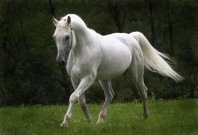 white beautiful horse photos