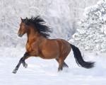brown beautiful horse photos pc