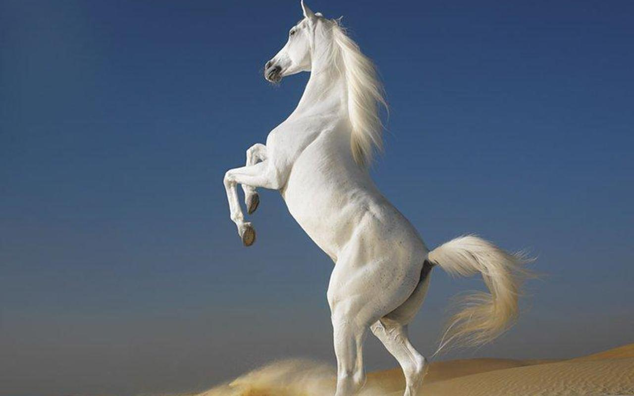 jumping beautiful horse photos