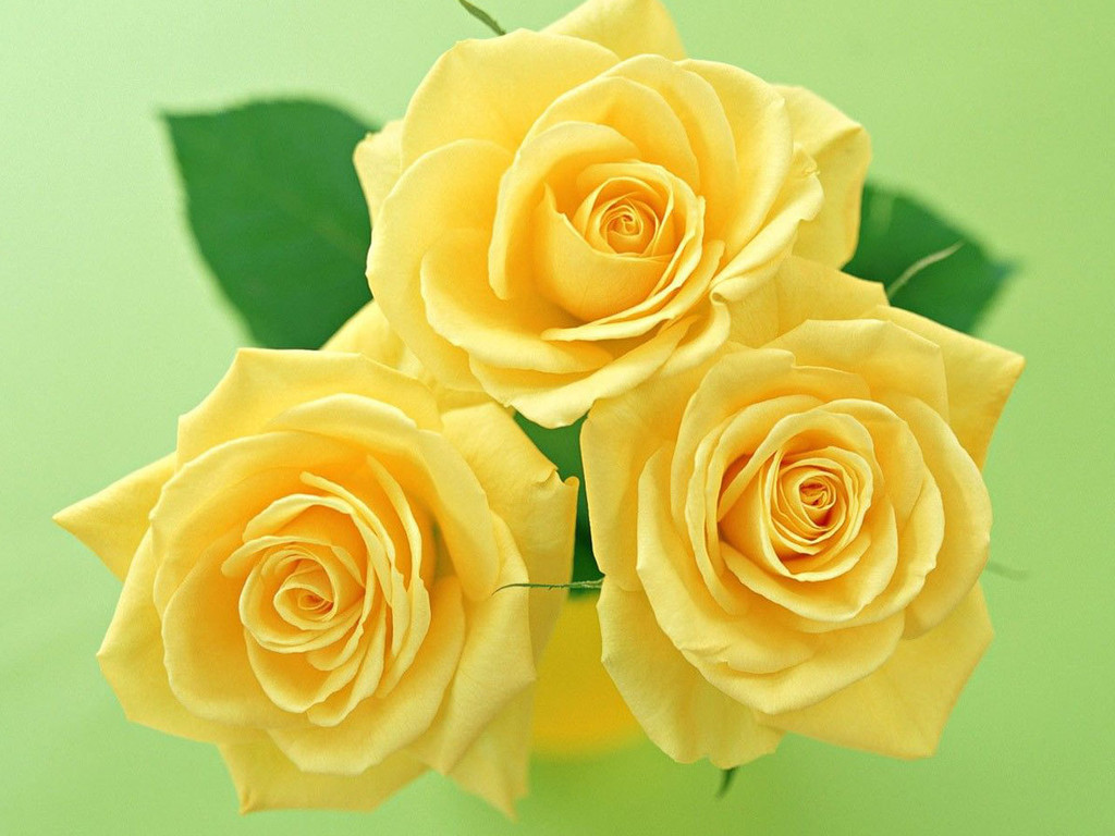 three yellow flower wallpaper