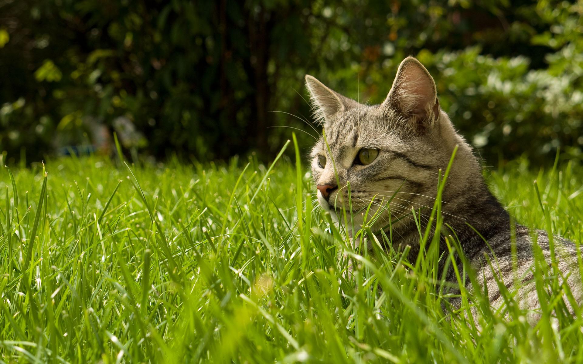 Hd wallpaper wide - Field In Cat Hd Widescreen Wallpaper