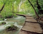 beautiful nature scene image pc