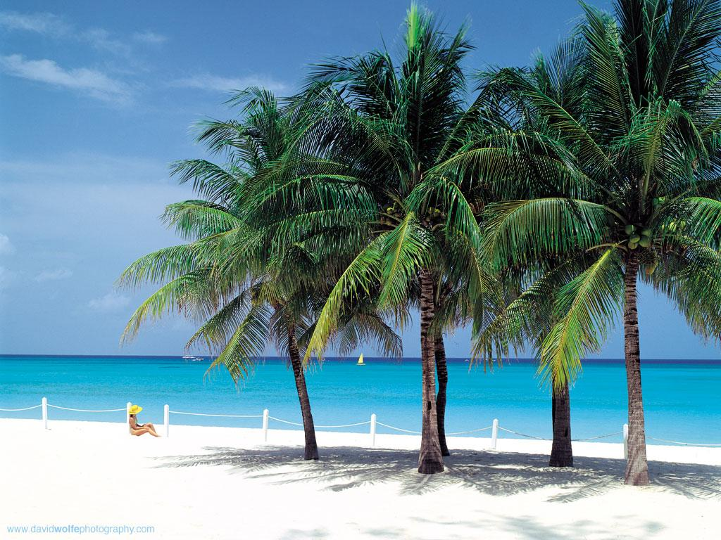 green tree sea cayman Islands