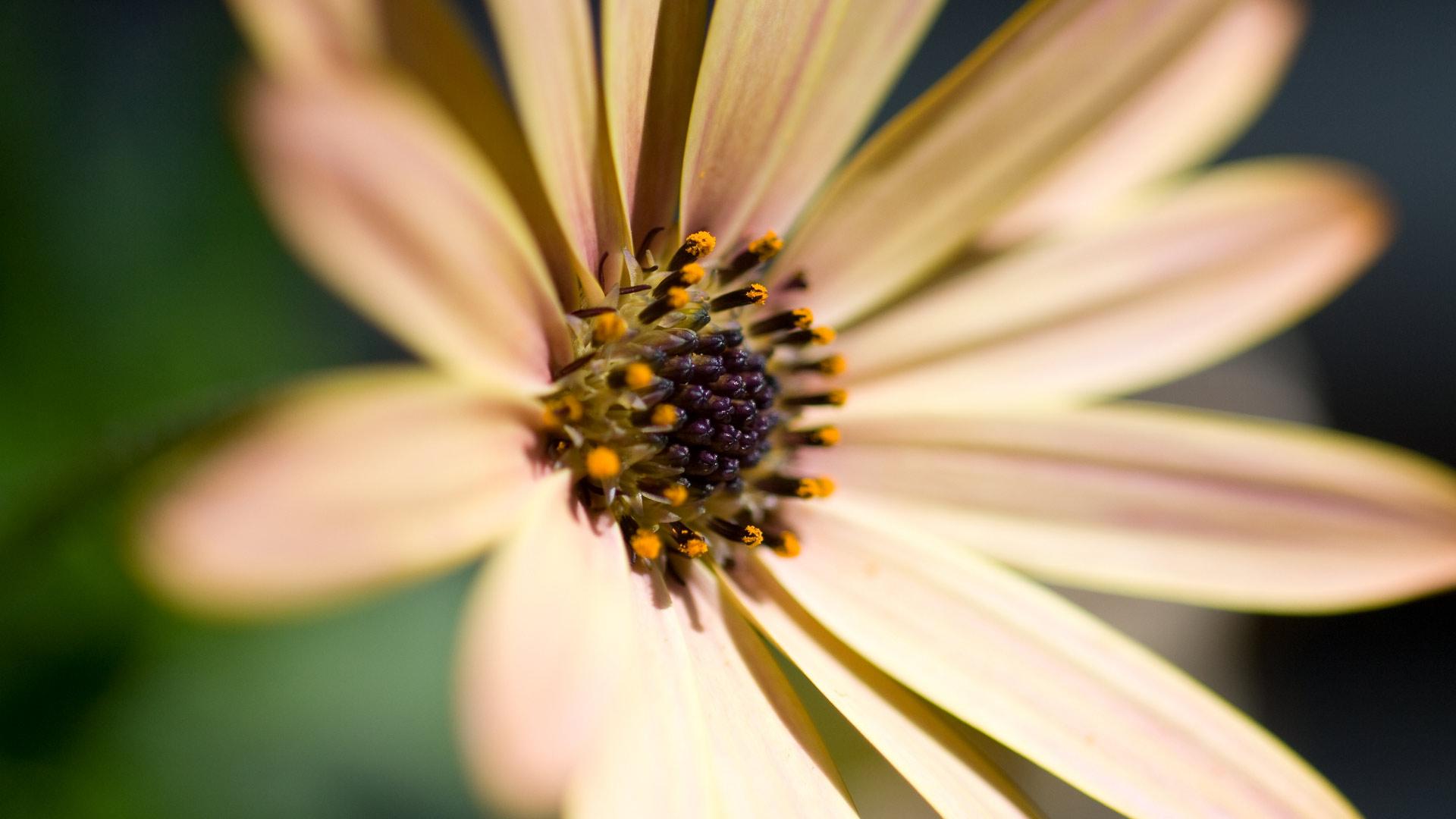 nice daisy flower image