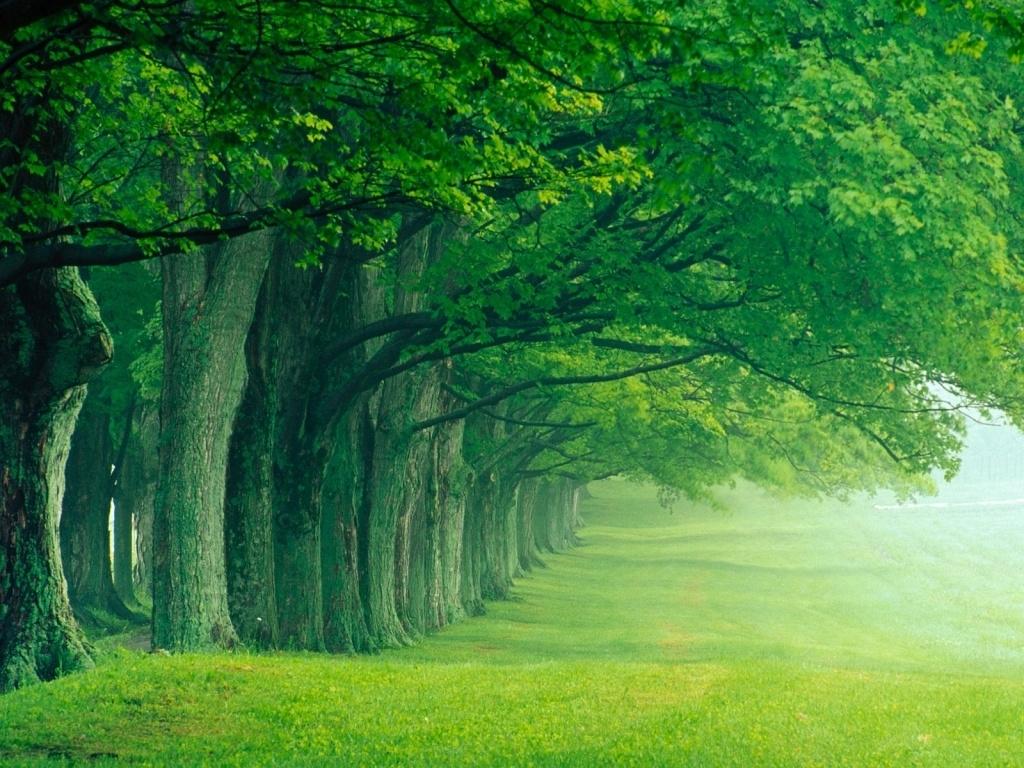 season beautiful forest photos