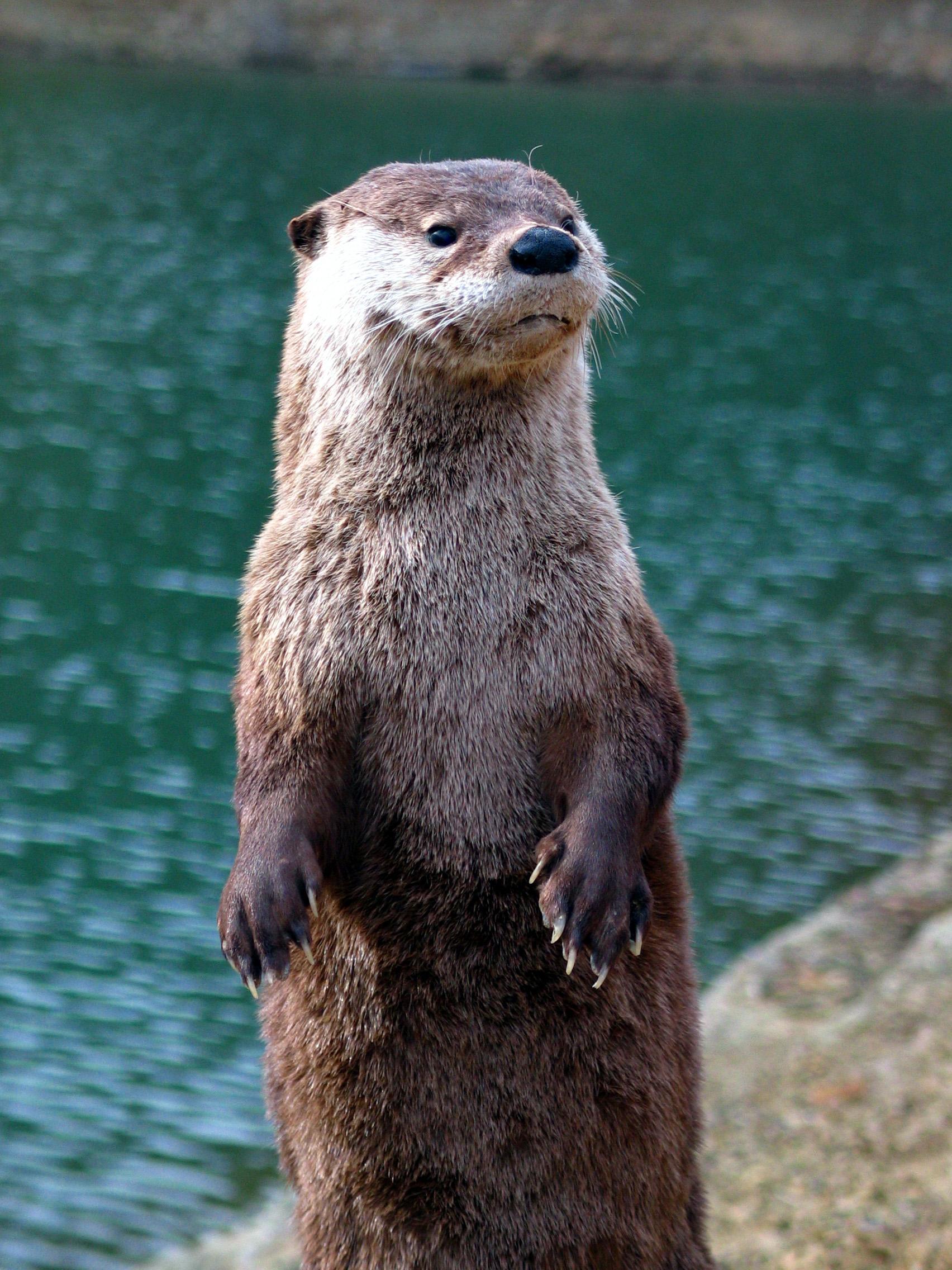 nice otter photos image