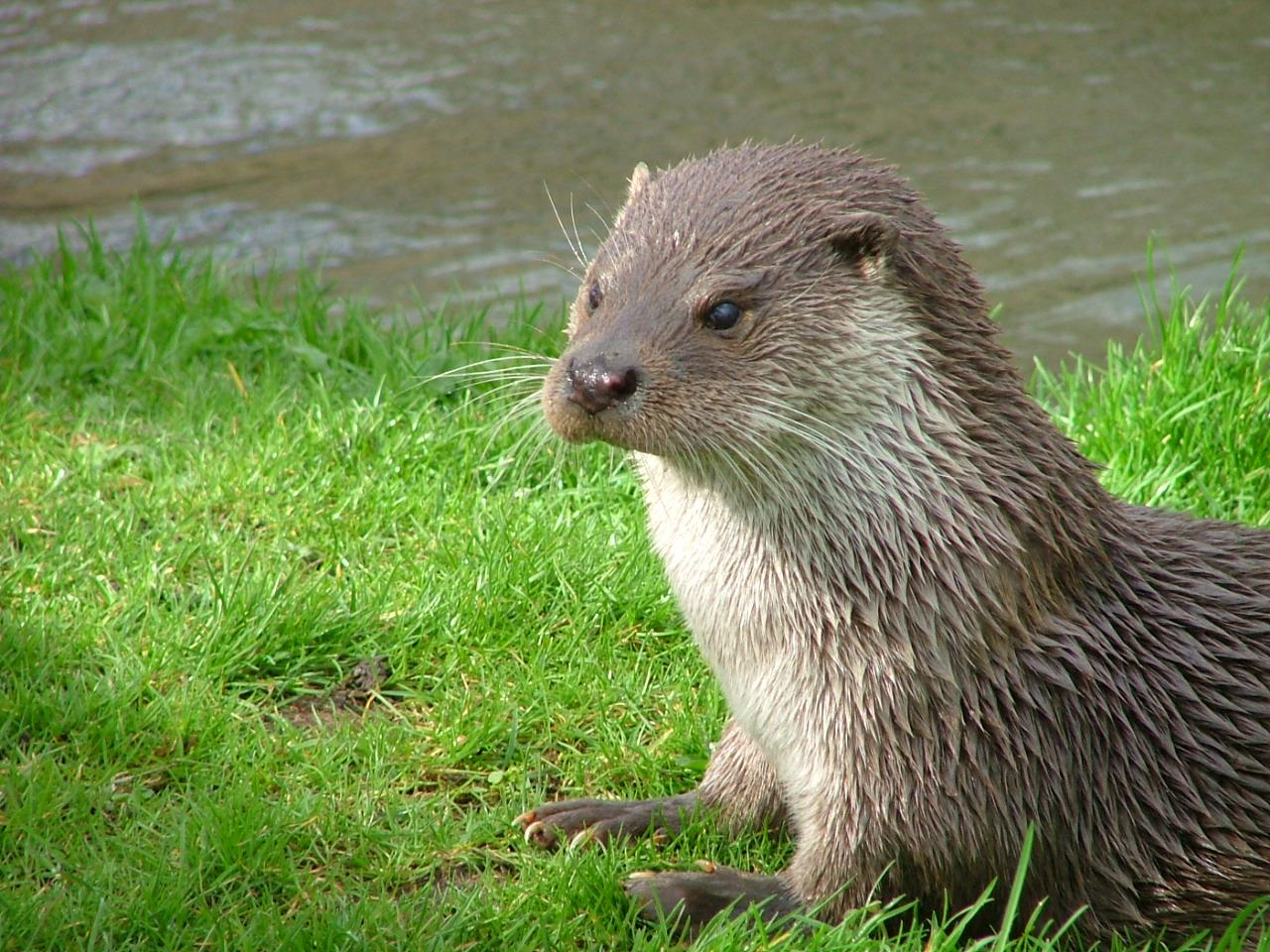 top otter photos image