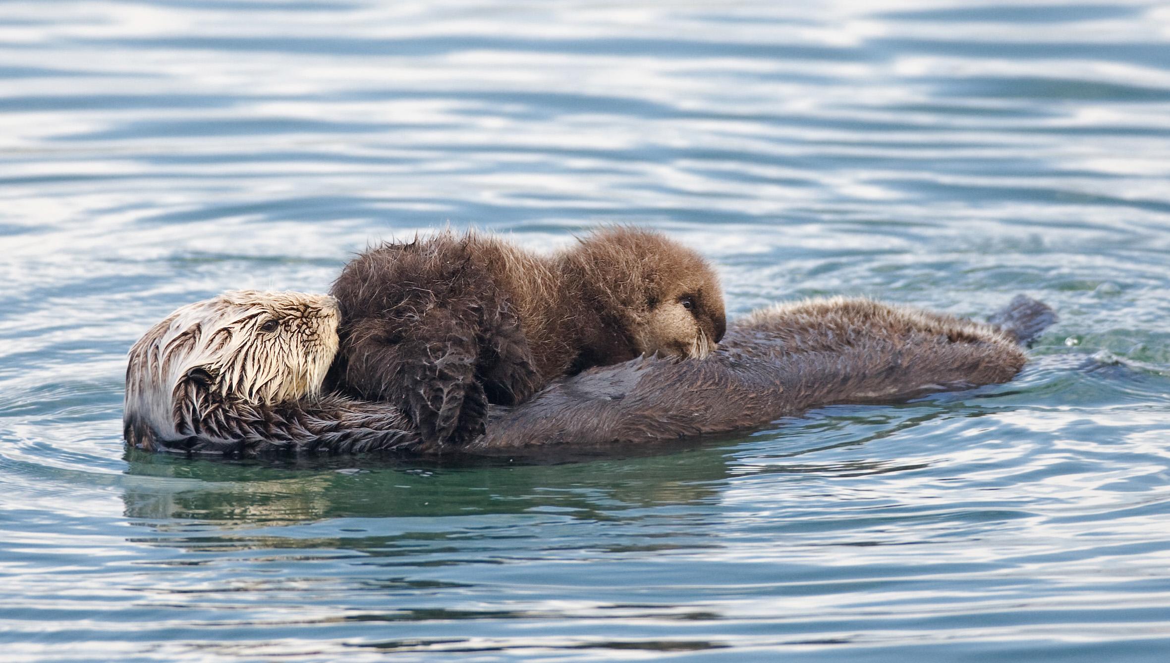 super otter photos image