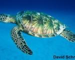 high resolution sea turtle photos