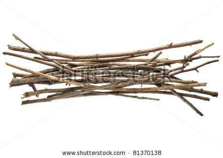 stock photo twig images