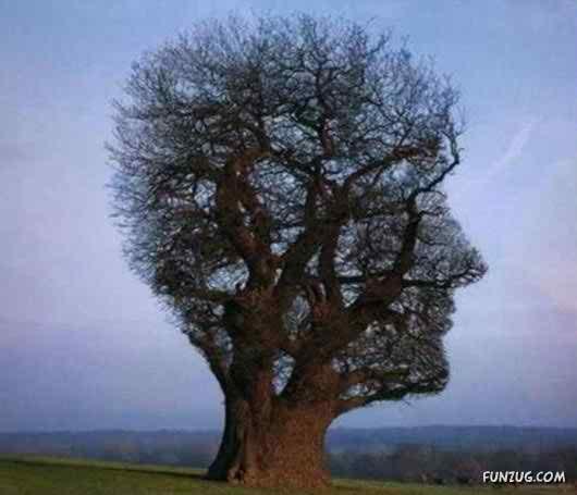 amazing unusual tree photos