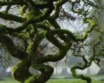 beautiful unusual tree photos