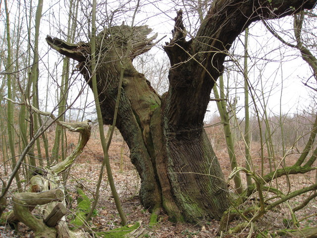 natural image unusual tree photos