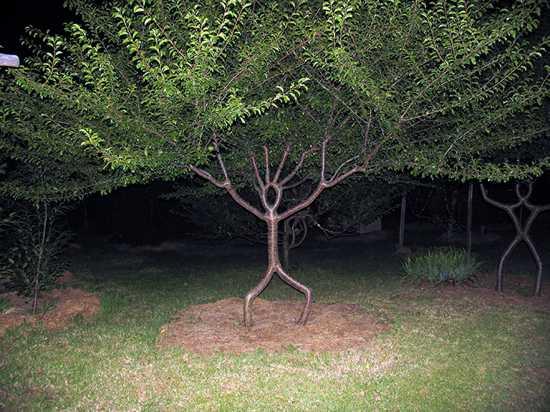 wonderful unusual tree photos image pc