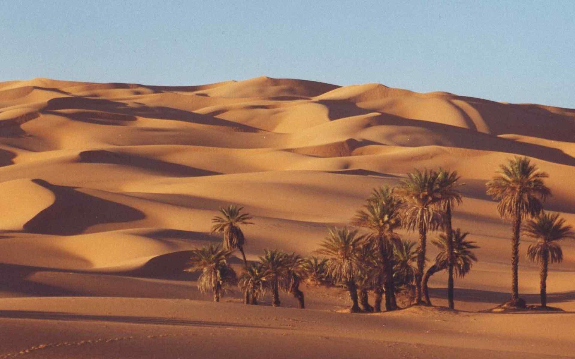 fonds sahara wallpaper image