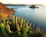 ocean cactus wallpaper image