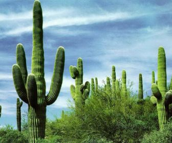 widescreen cactus wallpaper image