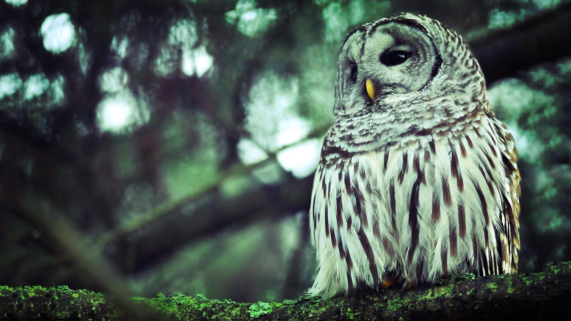 landscape owl wallpapers